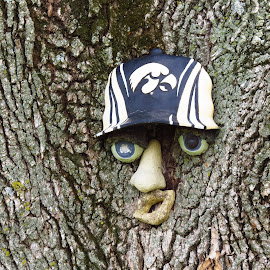 Tree Man by Cindy Cooper Houser - Nature Up Close Trees & Bushes ( tree, decoration, hawkeye fan, art, trees, man )