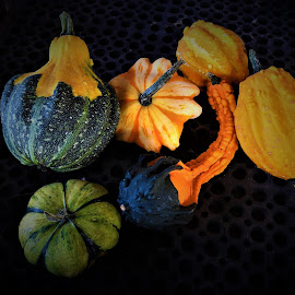 gourds for the fall season by Mary Gallo - Nature Up Close Gardens & Produce ( fall colors, fall objects, nature up close, gourds from the garden )