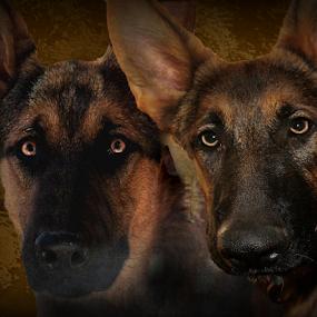 Father and Son by Dawn Vance - Digital Art Animals ( pet portrait, pet, digital art, german shepherd dog, dog portrait, animal )