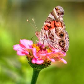 by John Vreeland - Digital Art Animals ( macro, hdr, art, buterfly, flowers )