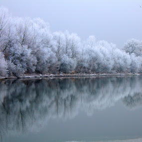 frosty trees above the river by Cosmin Popa-Gorjanu - Landscapes Waterscapes ( water reflection, winter, snow, frost, trees, frosty )
