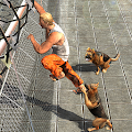 Free Download Prisoner Escape - Police Dog APK for Samsung