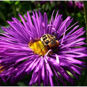 by Doreen L - Flowers Single Flower (  )