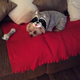 Just relaxing in my pjs by Carrie Barnett - Animals Other