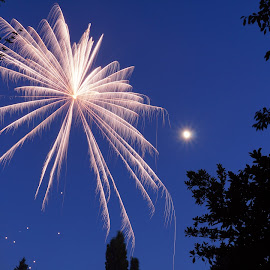 Sky Spider by Aja Nordgren - Public Holidays July 4th ( fire work, night photography, fireworks, long exposure, spider )
