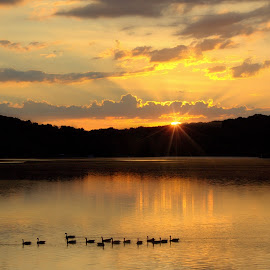HARMONY by Dana Johnson - Landscapes Sunsets & Sunrises ( clouds, dawn, waterscape, lake, sunrise, morning, geese, landscape, golden )