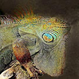 Dragon by Gérard CHATENET - Digital Art Animals