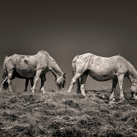 Brekfest by Andrija Vrcan - Animals Horses ( wild horses )