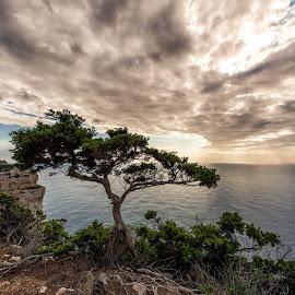 Trees series - Capo Caccia Alghero by Antonello Madau - Landscapes Cloud Formations ( antonello madau )