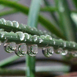 After the rain 09 by Pradeep Kumar - Nature Up Close Natural Waterdrops