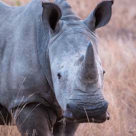 Rhino in low light by Warren Hanna - Novices Only Wildlife ( love, south africa, endangered, wildlife, rhino )