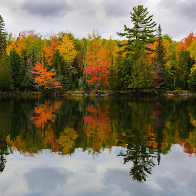 Autumn Mirror by Christopher Burnett - Landscapes Waterscapes ( sylvania wilderness, upper peninsula, michigan, pwcautumn, autumn color, crooked lake, fall color )