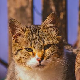 by Valentin Ungureanu - Animals - Cats Portraits