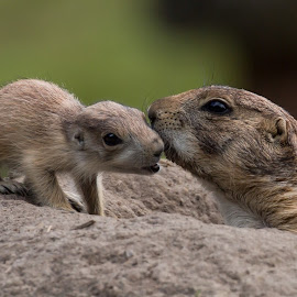Feelings by Jürgen Sprengart - Animals Other ( black tailed, rheine, prariedogs, zoo, mother and child )