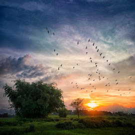 Bodganaj by Pranab Sarkar - Landscapes Sunsets & Sunrises ( sky, sunset, tree, birds, india, water, sun, landscape )