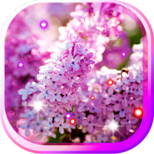 Lilac Flowers HQ LWP