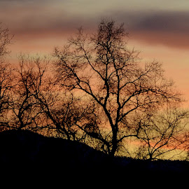 Evening Sunset by Fran Juhasz-Mckitrick - Landscapes Sunsets & Sunrises
