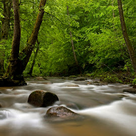 by Siniša Almaši - Nature Up Close Water ( water, up close, stream, forest, landscape, spring, woods, colours, nature, tree, cascade, trees, view, light, river,  )