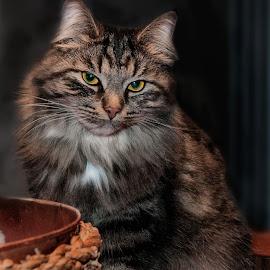by Walter Ciceri - Animals - Cats Portraits (  )