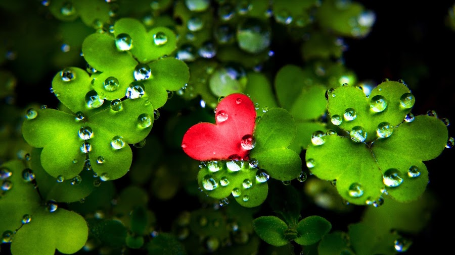 Little red by Nenana :) - Abstract Water Drops & Splashes ( love, heart, red, green, leaves )