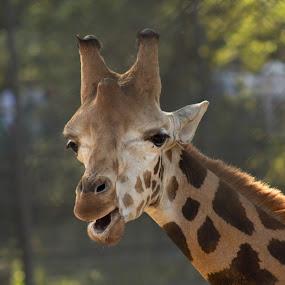 Innocent by Snehasis Daschakraborty - Animals Other Mammals