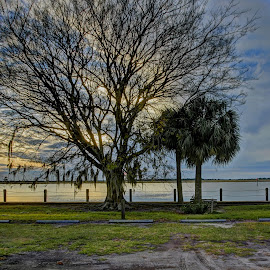 Dressed for Winter by Harry James - Nature Up Close Trees & Bushes ( water, coastal georgia, golden isles, tree, sunset, beach )