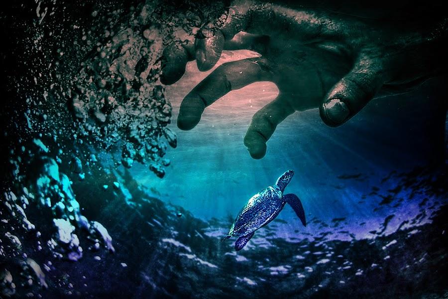 by T. Lee Kindy - Digital Art Animals