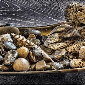 beach finds by Stephen Hooton - Uncategorized All Uncategorized