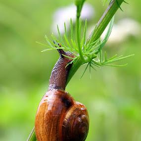 by Harie muchty arief ... - Animals Amphibians