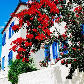 Street by Athena Kapsokavadi - City,  Street & Park  Neighborhoods ( red, white, plant, house, flower )