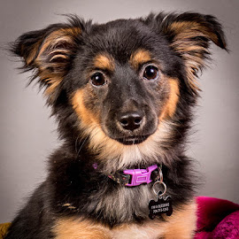 by Myra Brizendine Wilson - Animals - Dogs Portraits ( canine, foster kosse, foster dog, kosse, pet, foster, gcspca, dog, greater charlotte spca, foster dog kosse )