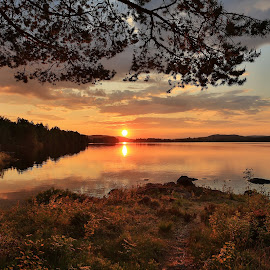 Peaceful by Rose-marie Karlsen - Landscapes Sunsets & Sunrises ( dawn, sky, nature, colors, sunset, summer, trees, evening, norway )