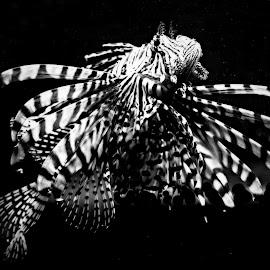 by Radka Brandová - Animals Sea Creatures