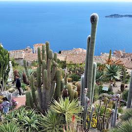 cactus family by Nele Hölzer - Instagram & Mobile Android ( cote d'azur, village, sea, garden, cactus )