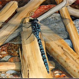 Driftwood Dragon by Glenda Clausen - Painting All Painting ( driftwood, watercolor paper, acrylic, dragonfly, rocks )