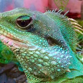 Emerald of the Rain Forest Dragon by Rick Luiten - Animals Reptiles ( thanks kris )