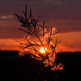 Flower sunset by Miroslav Ondříšek - Landscapes Sunsets & Sunrises ( circles, red, sky, sunset, sunlight, flower, sun )