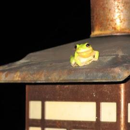Frog on a lamp post by Christine McDonagh Crawley - Animals Amphibians