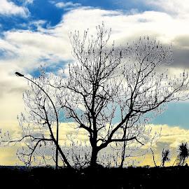 NZ by Zhenya Philip - Landscapes Weather