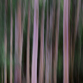 Impressionistic Woods by Cryptik Vizuals - Abstract Patterns