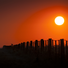 Fence by John Osmond - Landscapes Sunsets & Sunrises ( fence, lookout, sunset, australia, morgan, nsw, landscape, birds, sun, walla )