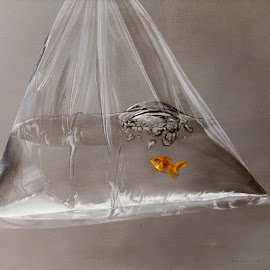 Small Fish Big Attitude by Miki Constantine - Painting All Painting