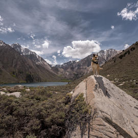 I claim this land  by Michael Keel - Animals - Dogs Portraits ( sierra nevada, sierras, convict lake, high sierra )