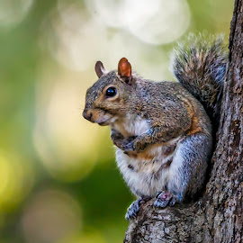 Mama Squirrel by Carol Plummer - Animals Other Mammals