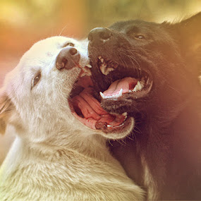 aggrrhh....arrggghhh by Andi Adinata - Animals - Dogs Playing ( pwcautumn )