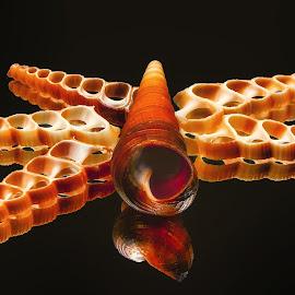 Turretella Center Cut shells by Dave Walters - Artistic Objects Still Life ( sea shells, nature, colors, lumix fz2500 )