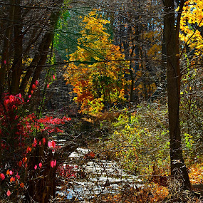 Stream in Autumn by Carl Testo - Landscapes Forests ( stream, autumn, forest )
