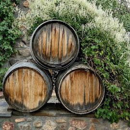 Wine Barrel by Gwen Paton - Food & Drink Alcohol & Drinks ( wine, barrel,  )