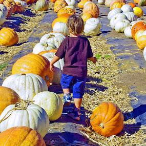 PumpkinHunting by Joanne Burke - Babies & Children Children Candids