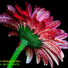 Flower... by Asif Bora - Typography Quotes & Sentences